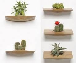 Image result for растения для ванной комнаты