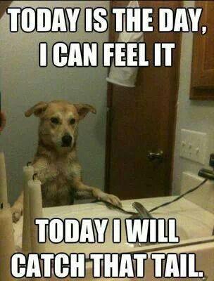 A dogs motivation .