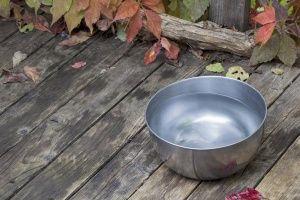 Put out a bowl of water for passing dogs. If this summer is as hot as predicted, you'll earn yourself a tail wag or two!