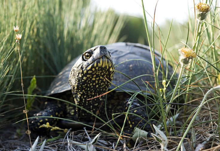 Żółwica w podróży