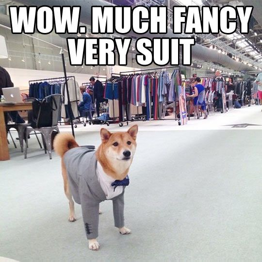 Wow. Much Style. Such Impressive. (Reminds me of my Nicolas!)
