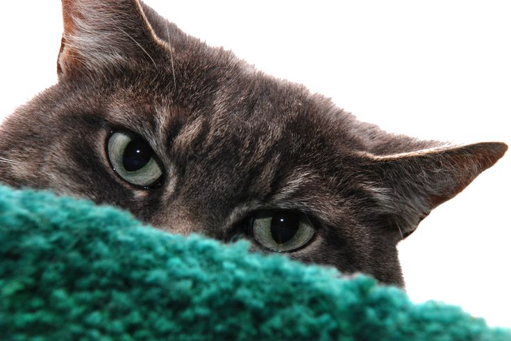 How to Remove Cat Hair From Laundry