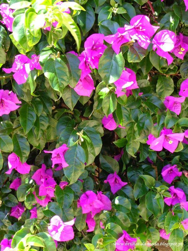 Brilhos da Moda: Flores, uma maravilha da natureza # 40