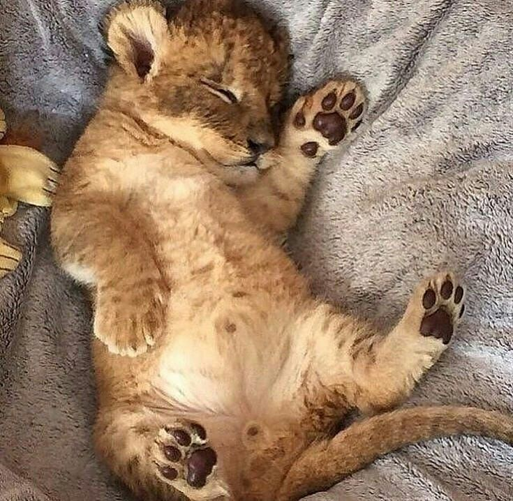 картинки со спящими животными