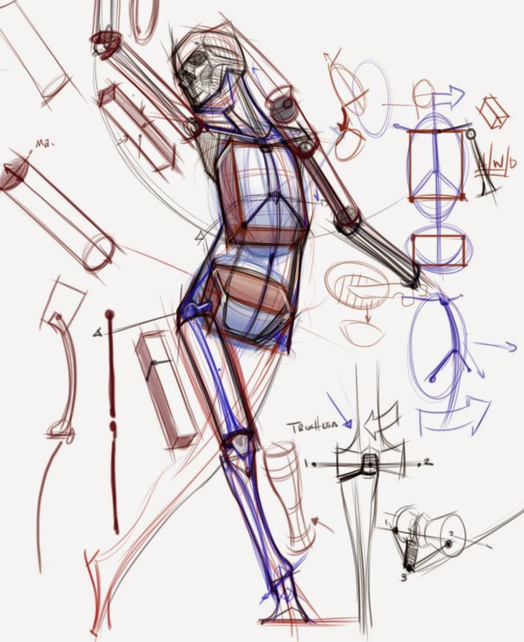 figuredrawing.info_news ~ note the torso box in thirds, pelvis down, overlay, and head construction