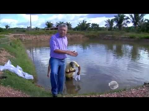 Criação de peixes em tanques é atividade forte em fazendas