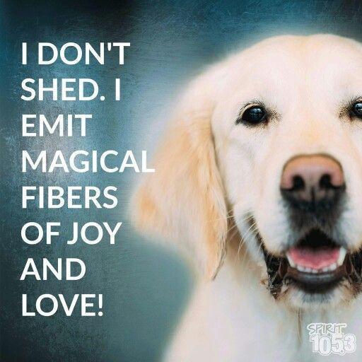 """I don't shed. I emit magical fibers of joy and love!"""