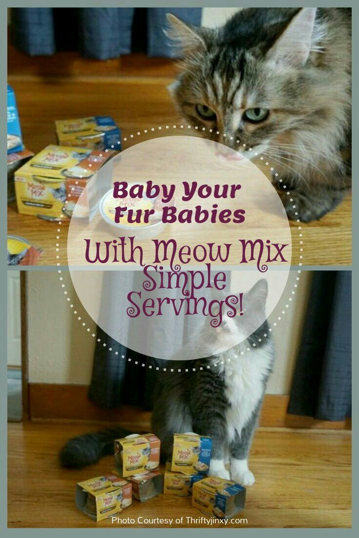 Time to get another fur baby and spoil them! Meow Mix Simple Servings provides you a single serving in every cup with no mess and no leftovers! @meowmix #ad!
