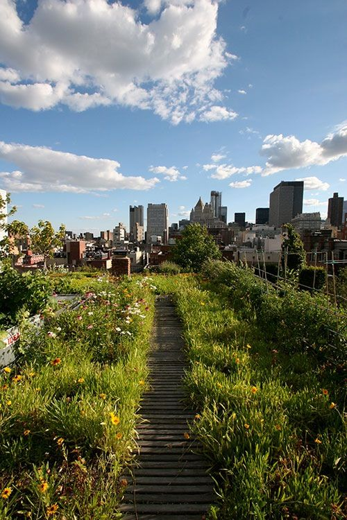 Ten Top Tips For Small Shady Urban Gardens: 349 Best Urban Gardening Images On Pinterest
