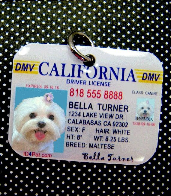 Pet ID's - check her blog she sews so cute stuff for her puppy and explains how to do it.This is so cute! #dogfordog