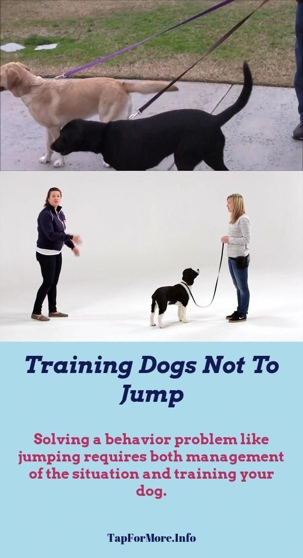 Stop Dog Jumping And Dog Body Language Check The Image For Many