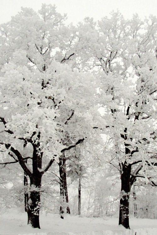 Inspiration aus der Natur! Schwarz – Weiß das kon…