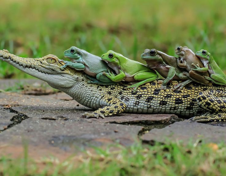 Best Friends Come in All Shapes and Sizes - Ardan News