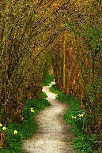 Yew Tree Tunnel, Netherlands