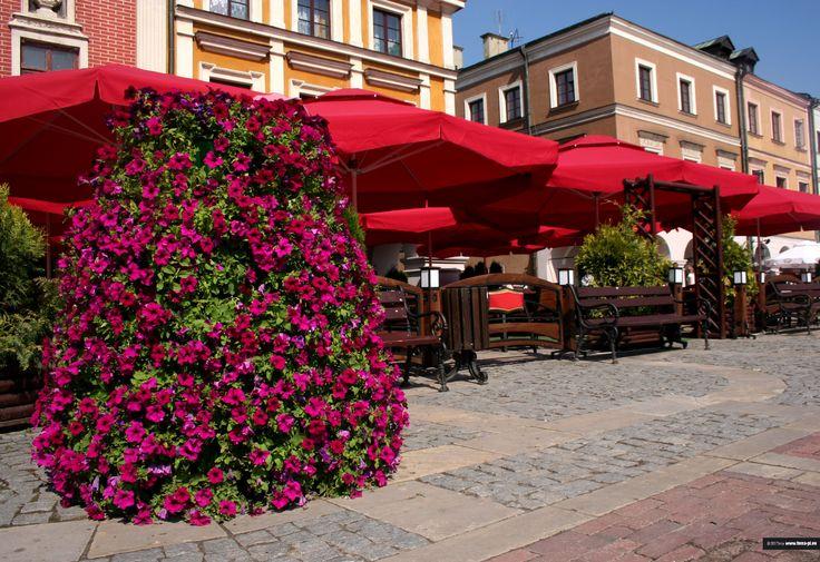 Ogródek restauracyjny – relaks wśród zieleni - Inspirowani Naturą