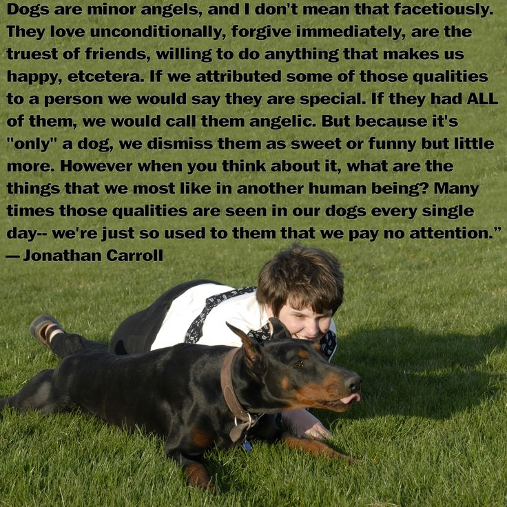 Dog Angel Quotes: 288 Best Images About ANIMALS -- German & Doberman