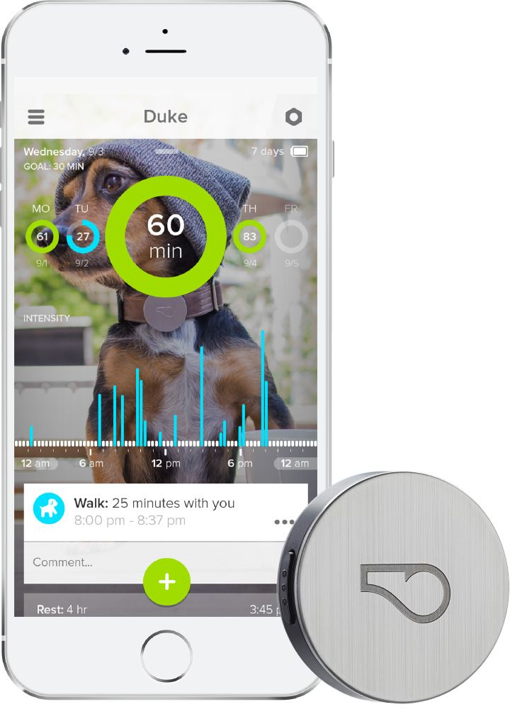 #Whistle sent Milo this #dogactivitymonitor, what a great way to keep track of their daily routine