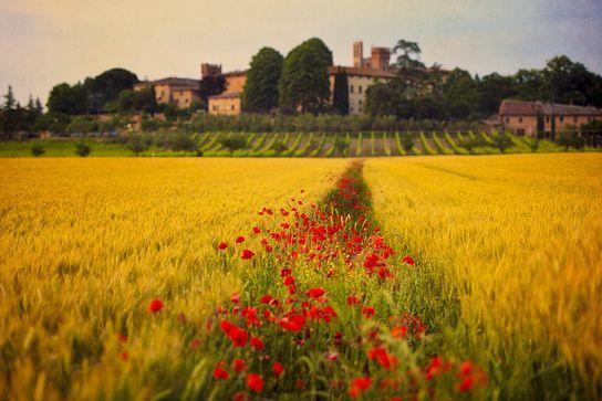 "5 ""Must Do"" Experiences in Tuscany : Tuscany Travel Blog"