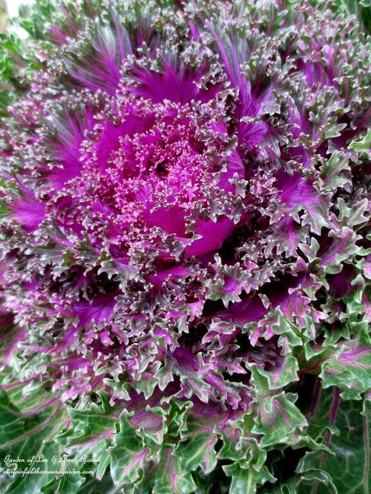 Les 25 meilleures id es de la cat gorie plantes annuelles for Plante annuelle