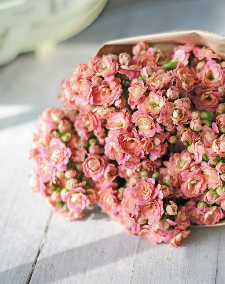 """KALANCHOE // Mit diesem Bund Kalanchoe """"4 Adorable Pink"""" verschenken Sie langanhaltende #Freude. Die #Farben der vielen Blüten und #Knospen, die Kopf an Kopf #blühen, bieten eine zauberhaufte #Farbenpracht von Rosé über Pfirsich bis hin zu Pink. Zu jedem Anlass eine tolle Idee, speziell auch zum #Muttertag. // Lieferbar bis zum 12.05.2015"""