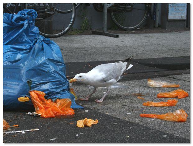 Gescheurde vuilzakken voorkomen.