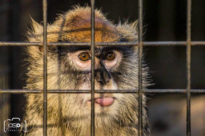 Lo Zoo di Buenos Aires libera tutti gli animali dopo 140 anni di prigionia