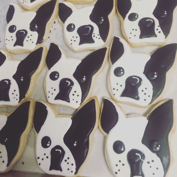 Boston terrier cookies by Hayleycakes and cookies in Austin tx