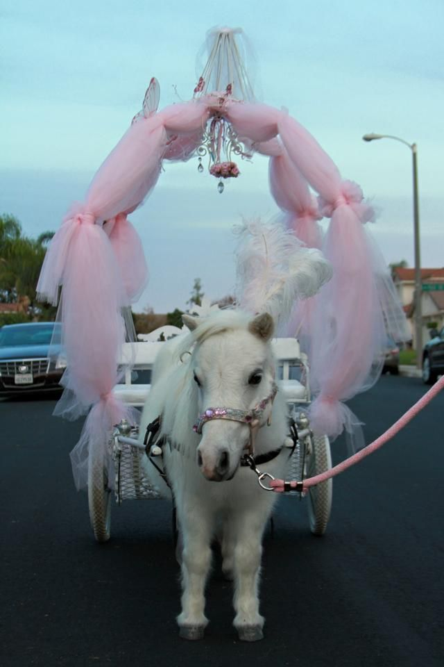 Miniature horse carriage rides, dreams do come true! AllGodsCreatures.net