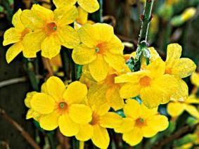 1000 id es propos de plante grimpante ombre sur pinterest sublime porte jardin d 39 hibiscus - Plantes ombre exterieur nord ...