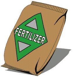 How to fertilize hydrangeas