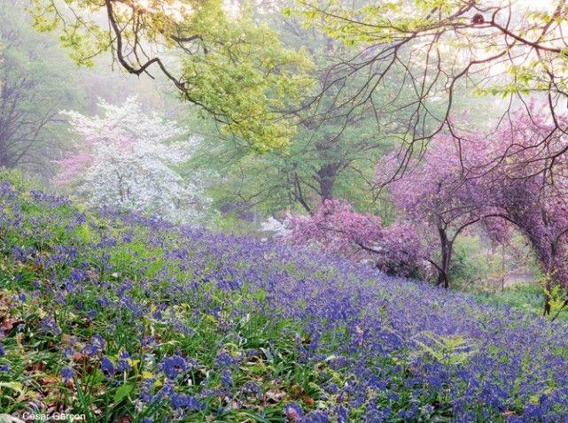 En vallée de Chevreuse, ce jardin déroule une pente boisée qui mène à un jardin clos, structuré et élégamment fleuri en toutes saisons. L'œuvre d'un paysagiste amoureux de la nature
