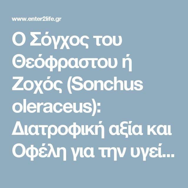 Ο Σόγχος του Θεόφραστου ή Ζοχός (Sonchus oleraceus): Διατροφική αξία και Οφέλη για την υγεία – enter2life.gr
