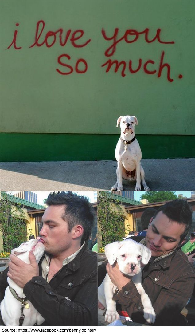 Benny Says His Goodbyes In Touching Tribute Letter Written By His Human With Images I Love Dogs Animal Stories Dogs