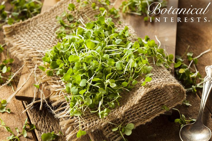 What are microgreens? Microgreens are young leafy