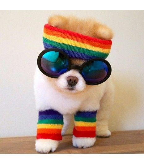 @Who What Wear - Boo                 Style: The cutest pup in the world is no slouch in the style department. In fact, The Coveteur just raided his closest (a serious fashion honor indeed). Check out the story, here. Follow: @buddyboowaggytails @PIXIE MARKET