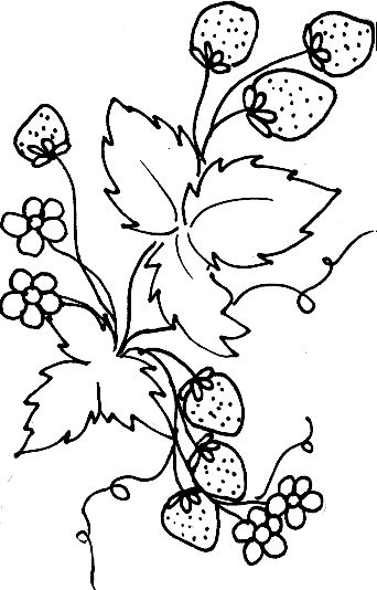coloriage feuilles et fraises