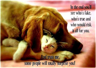 trustSnuggles, Puppies, Best Friends, Bestfriends, Dogs Cat, Pets, Sweets Dreams, Cuddling Buddy, Animal