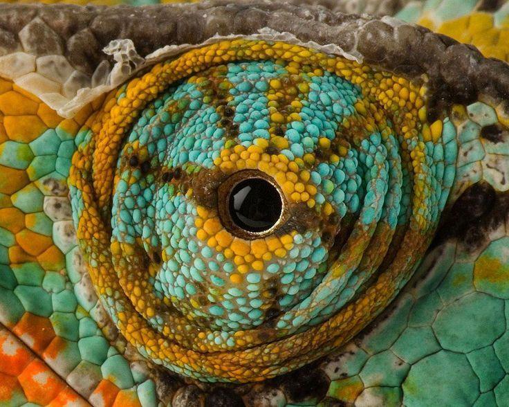 Chameleon's Eye  http://earth66.com/macro/chameleons-eye/