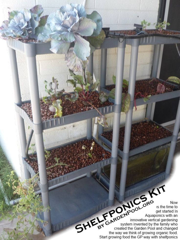 Aquaponic Kit Totally Diyable And Perfect For Patio
