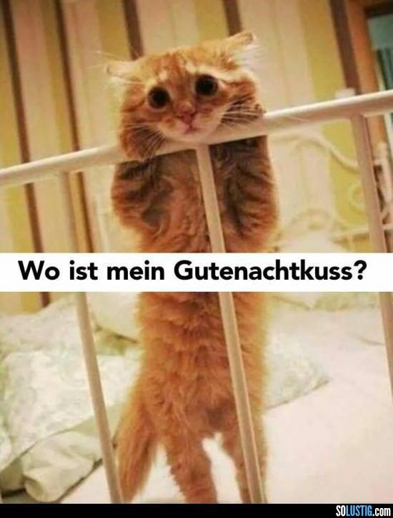 Wo ist mein Gutenachtkuss? (Lustige Tier Bilder) - #blick #gutenachtkuss #katze #traurig #warten