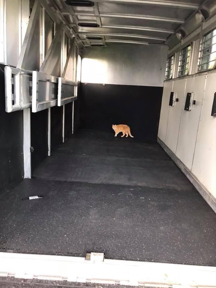 4x6 Rubber Floor Gym Mats 3 4 In Black Rubber Horse Stall Mats Gym Flooring Rubber Light Trailer