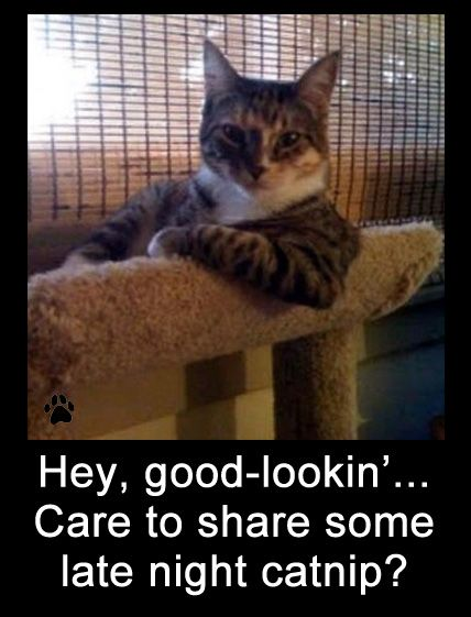 Funny Dog Photos with Captions Hey good lookin care to share some late night catnip
