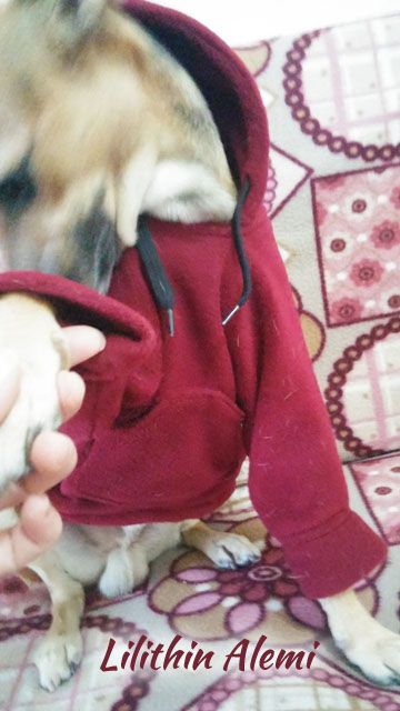 ....# Lilithin #....: Haydut Efendinin Sweatshirt'ü (Köpeğe Kapşonlu kazak) dog hoodie