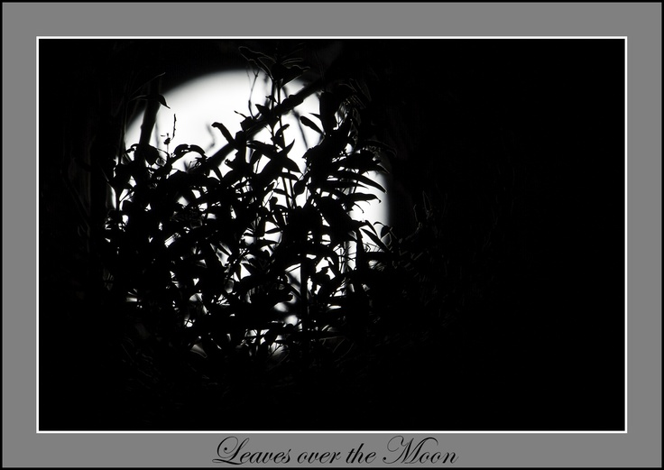 Moon, Leaves, Night Photography.