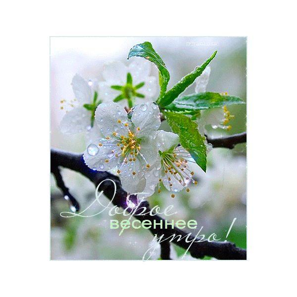 серёжки, весна, нежная зелень, весеннее цветение, красота природы