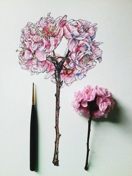 Иллюстрации цветов от Noel Badges Pugh