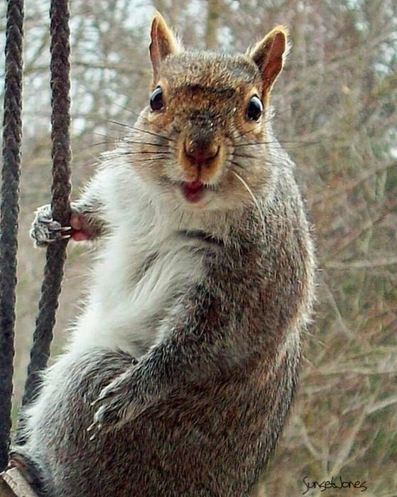 Earl The Squirrel | Photo by Robert Orinski with Pin-It-Button on FineArtAmerica