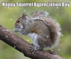 Happy Squirrel Appreciation Day  (**Feelin' Squirrely** group board)