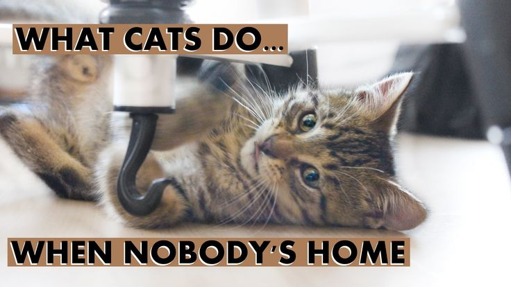 What Cats Do When Nobody's Home