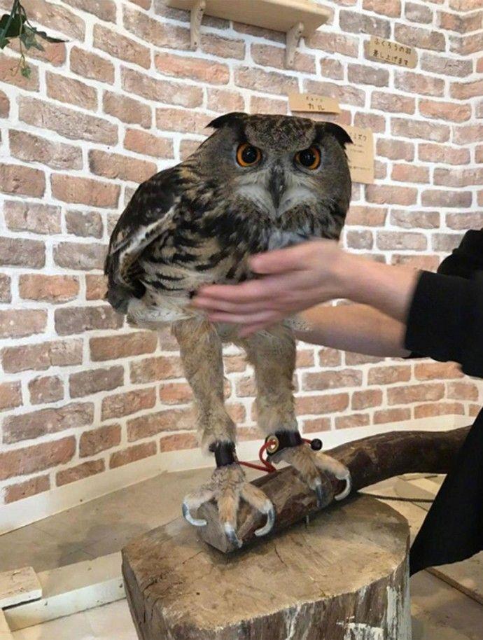 Baby Owls Legs : Social, Skills